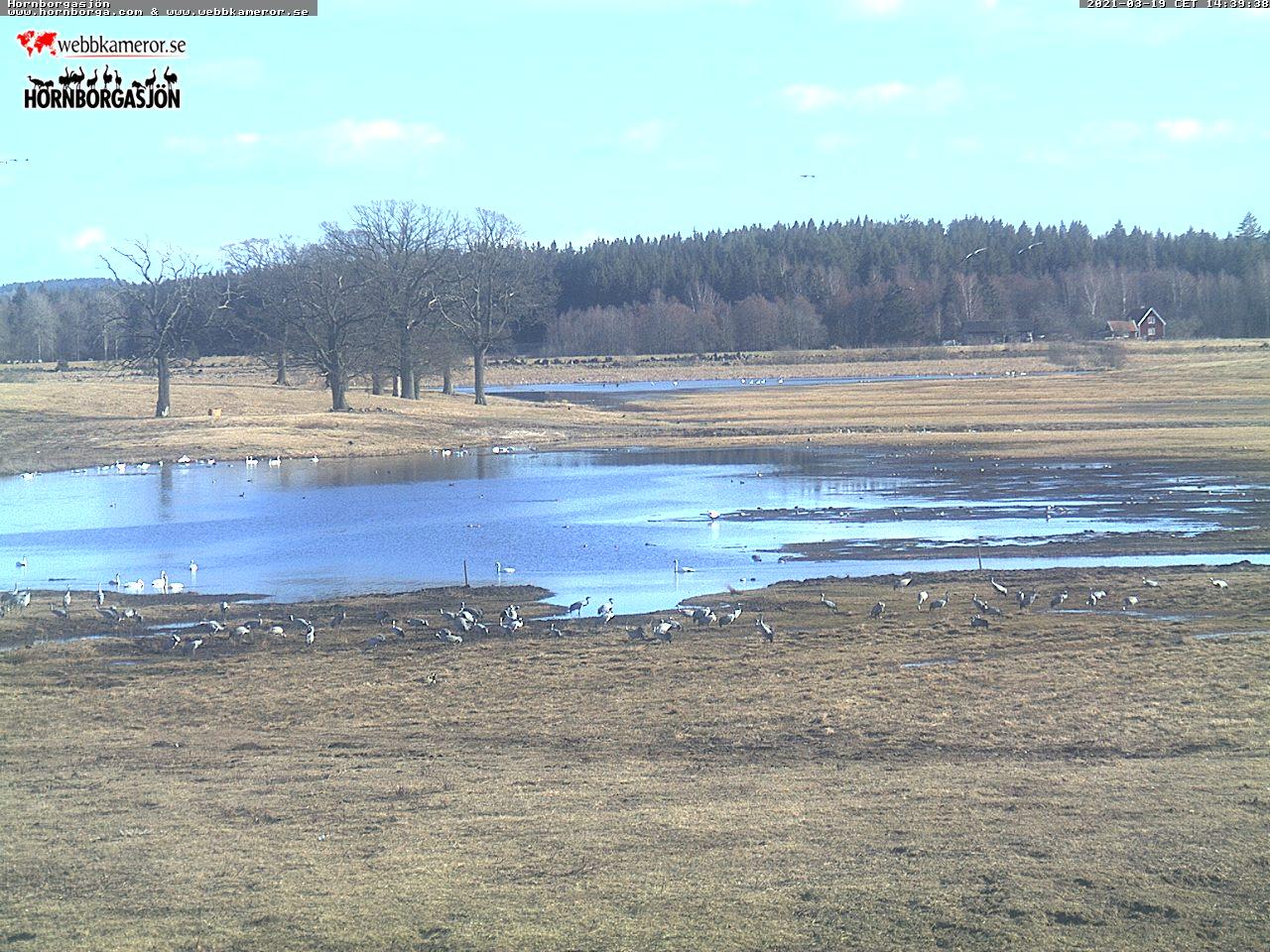Webbkamera vid Trandansen, Hornborgasjön